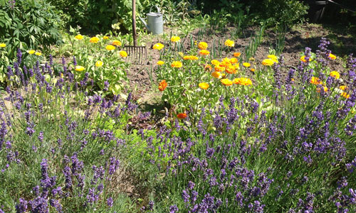 Accommodation and summer flowers at Albertine Bed and Breakfast
