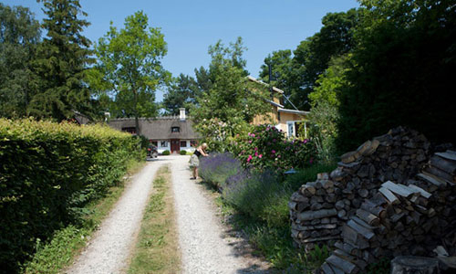 driveway_to_bed_and_breakfast_hotel_albertine_lavender_and_roses