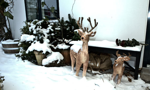 snow_and_deer_in_front_of_bed_and_breakfast_hotel_albertine
