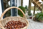 natures_decor_with_chestnuts_at_bed_and_breakfast_hotel_albertine
