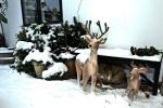 sne-og-rensdyr-til-billig-overnatning-paa-bb-hotel-albertine