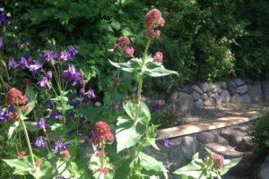 Blumen und Stonehenge