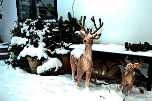 Snow and deer in front of BB Hotel Albertine