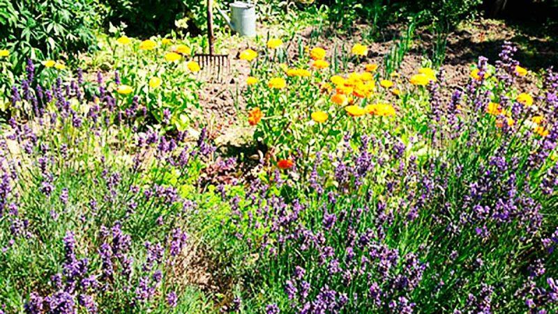 Overnatning med sommerblomster i haven hos Albertine Bed and Breakfast