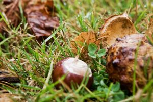 autumn-and-chestnuts