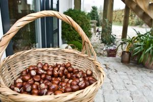 Natures decor with chestnuts